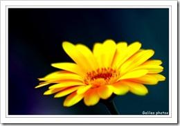 14 déc ~ Fleurs1
