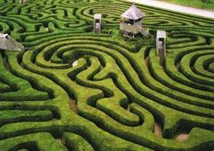 4 JUIN ~ maze