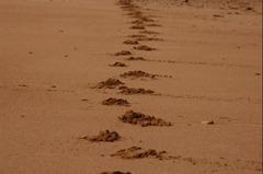 5 JUIN ~ 20070330082440_marcher dans le sable